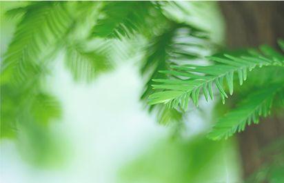 嫩绿家园,植树造林靠大家